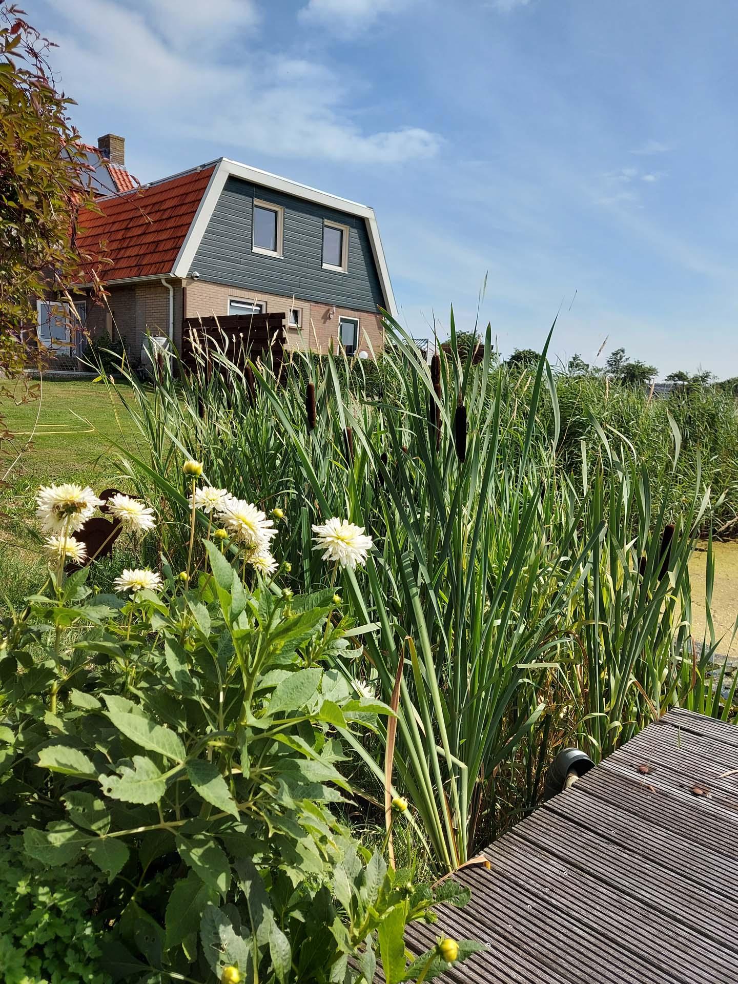 Vlonder met bloemen en groen gras bij het appartement Ameland